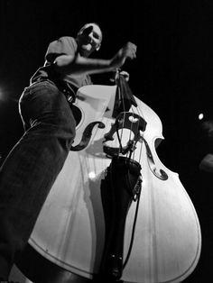 stand up bass