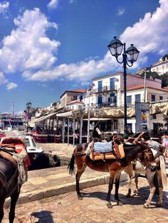 Hydra, Greece there is no motorized vehicles here just donkeys for transportation!!