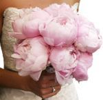 Buy classic and beautiful peonies flowers from Whole Blossoms at excellent prices. Fresh cut peonies flowers are generally used for weeding in bridal bouquets and centerpieces. Call us today at 1-877-969-2566 to get lovely flowers at your door step.  For more information visit: http://www.artipot.com/articles/1860851/everything-you-need-to-know-about-peonies.htm