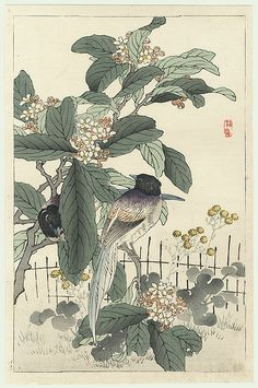 Original Kono Bairei (1844 - 1895) Japanese Woodblock Print Long-tailed Birds on a Blossoming Branch