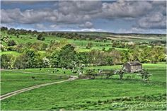 Cows in Coverdale one of the prettiest dales in Yorkshire, HDR Yorkshire Dales, North Yorkshire, Cows, Hdr, Sunny Days, My Dream, Europe, Places, Lugares