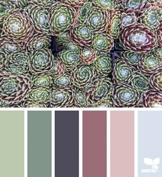 Succulent Hues ~ design seeds