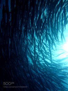IMG by NoemieLang #nature #photooftheday #amazing #picoftheday #sea #underwater