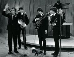 The Beatles with a dachshund on the Ed Sullivan Show in 1964.  He was just a little ween. You know what I mean. And the way he looked was way beyond compare. How could I walk with another. Wooooo. With my doxie standing there.  Thank you very much.