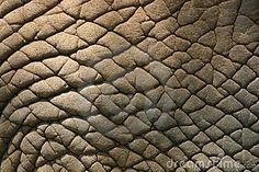 Google Afbeeldingen resultaat voor http://nl.dreamstime.com/de-huid-van-de-olifant-thumb602312.jpg