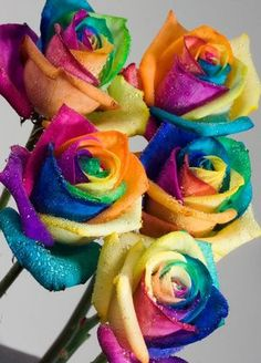 """Happy Roses"", also known as Rainbow Roses, are the most expensive roses in the world.  These are specially treated cream roses that are dyed to brilliant perfection.  They make me happy just looking at them!"