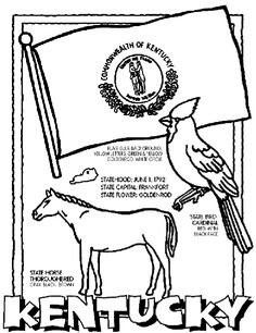 Kentucky Unit Study State Symbol Coloring Page By Crayola Print Or Color Online