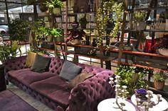 A luxurious purple velour Chesterfield sofa