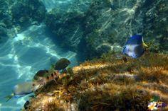 Photos plongée en Martinique : les Anses d'Arlet plage du Bourg  #Martinique #snorkeling © AliZéMédia