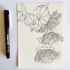 Illustration Art Line Draw 66 Ideas Botanical Drawings, Botanical Art, Botanical Line Drawing, Floral Illustrations, Illustration Art, Australian Native Flowers, Australian Plants, Australian Artists, Floral Drawing