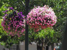 Santa Fe Trip Plaza flowers - gorgeous!