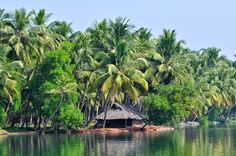 Backwaters: The Tranquil Water of the Indian Lakes