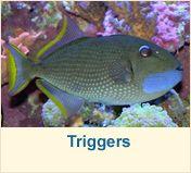 Salt Water Fish | Marine Life | Tropical Fish | Reef Fish & Salt Water Tank Fish Salt Water Fish, Salt And Water, Fresh Water, Beautiful Sea Creatures, Two Fish, Saltwater Tank, Water Animals, Marine Fish, Underwater Life
