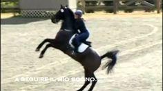 L'equitazione è questa