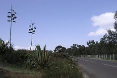 The road to Massawa, two kilometers from Asmara. The location of this very small zoo is in the area called Biet-Ghiorgis on the road towards Massawa. It can be reached by public bus (number 1). The entrance fee to the zoo grounds is two Nakfa ($0.15).