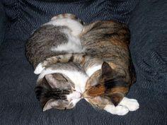 07-kissing-cat.jpg (400×300)