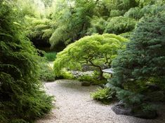 The John P. Humes Japanese Stroll Garden in Mill Neck New York includes bamboo mosses ferns and Japanese maples. Lush Garden, Shade Garden, Garden Cottage, Garden King, Garden Homes, Garden Villa, Connecticut, Amazing Gardens, Beautiful Gardens