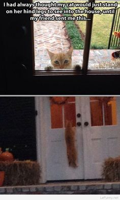 Funny cat looking in