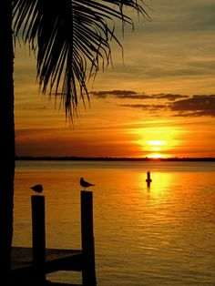 Tarpon Lodge, Pine Island, Florida