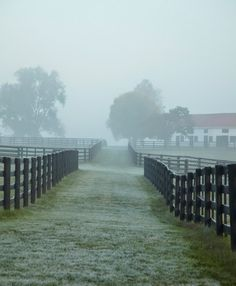 Graham Beck's Gainesway Farm in Lexington, Kentucky encompasses 1500 acres in the Golden Cresent of the Inner Bluegrass region. Horse Stables, Horse Barns, Horses, Kentucky Horse Farms, Louisville Kentucky, Scenery Photography, Horse Ranch, My Old Kentucky Home, Dream Barn
