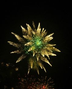 The Firework Flower New Year Fireworks, Walls, Flowers, Plants, Plant, Royal Icing Flowers, Flower, Florals, Floral