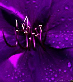 josephdmello: Purple macro