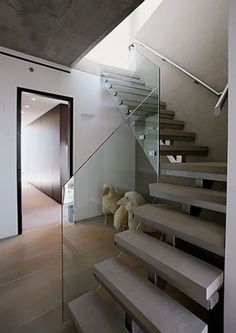 glass railing floating staircase