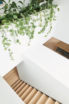 Real reno: Melbourne corner store becomes family home - The Interiors Addict Diy Blinds, Diy Curtains, Timber Outdoor Furniture, Engineered Timber Flooring, Types Of Timber, Melbourne Suburbs, Albert Park, Australian Homes, Cladding