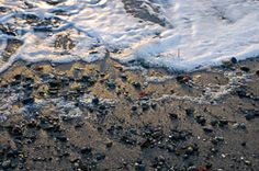 Effervescent Permanence - from Twelve Months at Cultus Bay