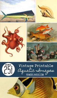 Daily DIY: 25+ Free Printable Vintage Aquatic Images