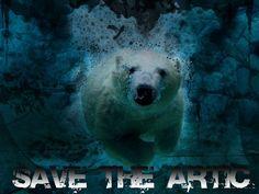 """Anuncio que hice para la campaña """"Save the Arctic"""" que intenta abrir los ojos del mundo. Entren a http://rising.savethearctic.org/es-CO/arctic-fox/50453ca4a1f2990002001446    para ayudar con un simple clic!"""