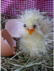 Easter Chicks  two needles