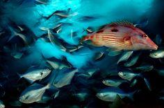 Diez fotografías de nuestros océanos (en su día)  Hoy ocho de junio es el Dia Mundial de los Océanos. Esta fecha fue elegida por la Asamblea General de Naciones Unidas en el año 2009.  Os dejamos una selección de diez fotografías de Brian Skerry sobre la diversidad biológica de los ecosistemas marinos.