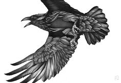 Raven Bird Drawing by bird artist Phil Mumby