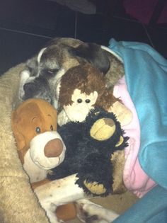 Susie always sleeping with her stuffed animals