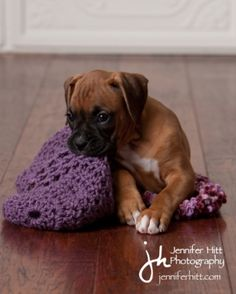 Rocket Boxer Puppies - Week8