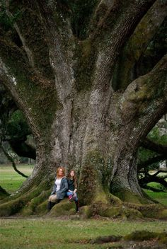 Me and my daughter - HUGE Oak Tree! for including yourselves because now it's got some size perspective. Giant Tree, Big Tree, Trees And Shrubs, Trees To Plant, Weird Trees, Unique Trees, Old Trees, Nature Tree, Tree Forest