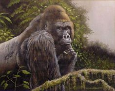 Silverback. Oil Painting. (Cassandra Graham) Silverback Gorilla, Wildlife Paintings, Primates, My Sister, Monkeys, Graham, Oil, Artists, Animals