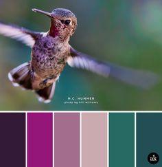 a hummingbird-inspired color palette // dark purple (aubergine), magenta…