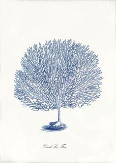 Blue Coral Art Print 5 x 7 Natural History Sea by 1001treasures