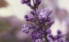 Lost purple by xBBS.deviantart.com on @deviantART