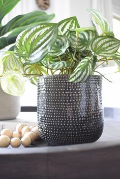 Best Modern Faux House Plants – Where to Buy + How to Style Them