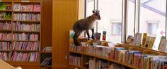 """人口が増え続ける「日本一小さな村・舟橋村」には、""""日本一子どもに優しい図書館""""があった"""