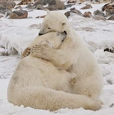 The way animals hug melts me _Mari …