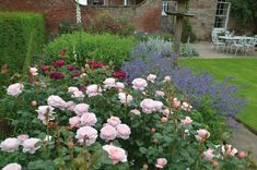 Shed Bed color combo. Pink, purple and magenta.  Rose Queen of Sweden, Salvia, and possibly magenta thistles