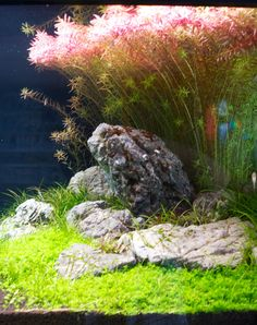 aquascapes aquarium