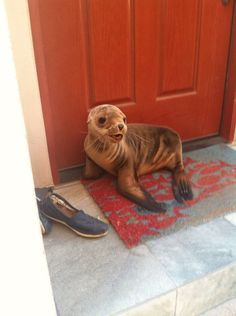 friendly neighborhood seal