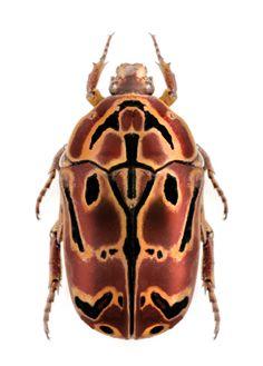 4244 Best Gotta Love Bugs Images In 2019 Beetles Beetle Bug