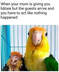 Enjoy a hilarious new dump of funny memes & crazy random pics. Comical, outrageous & full of laughs, this batch of the funniest memes are full of insane inspiration. Memes that hit so close to home! Animal Memes, Funny Animals, Animal Quotes, Vidéo Gag, New Memes, Memes Humor, Funny Humor, Mom Funny, Humor Humour
