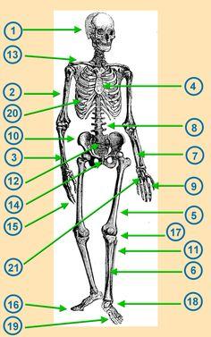 endlich pause 2 0 ab zum skelett schule sachunterricht anatomie skelett anatomie und. Black Bedroom Furniture Sets. Home Design Ideas